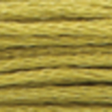 A close-up view of embroidery thread skeins, held taught horizontally. The shade is a medium muddy green colour in six strand cotton floss, like basil in fall
